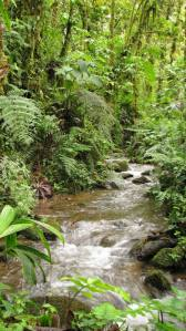 a-little-creek-at-yanayacu