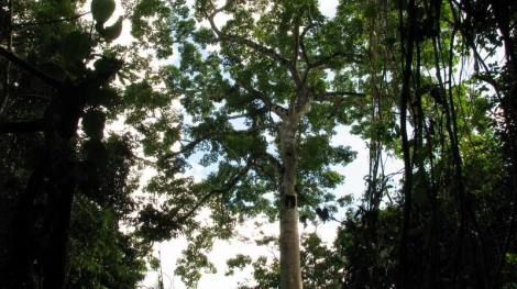 a tree on Mirador trail