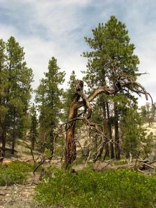 a charred tree