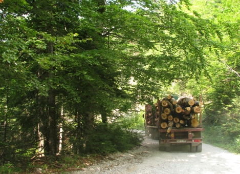 loads of logs are being carried out..