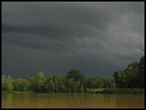 Borneo, 2012 481.1.