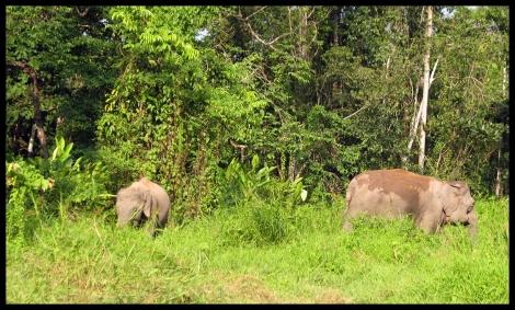 Borneo, 2012 492.1.