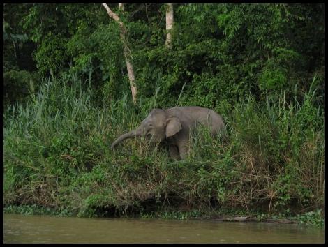Borneo, 2012 528.1.
