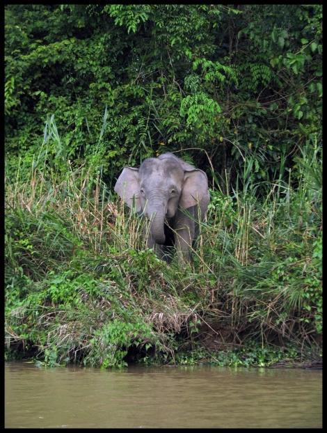 Borneo, 2012 543.1.