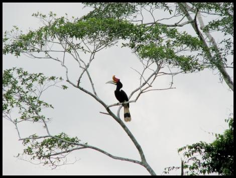 Borneo, 2012 558.1.