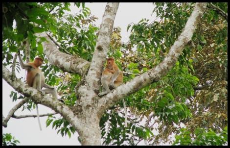 Borneo, 2012 591.1.