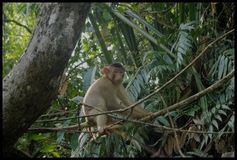 Borneo, 2012 645.1.