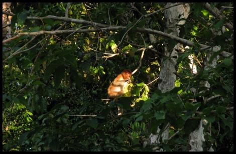 Borneo, 2012 707.1.