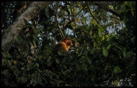 Borneo, 2012 729.1.