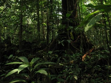 Borneo, 2013, Brunei and Gunung Mulu 540.1