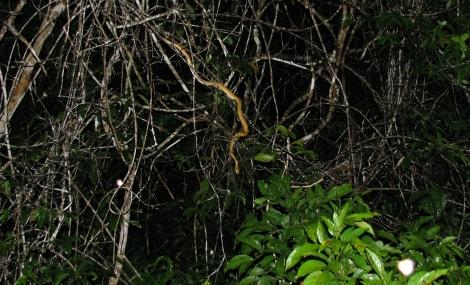 Ecuador, 2008 180