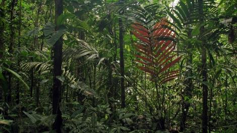Ecuador, 2008 824