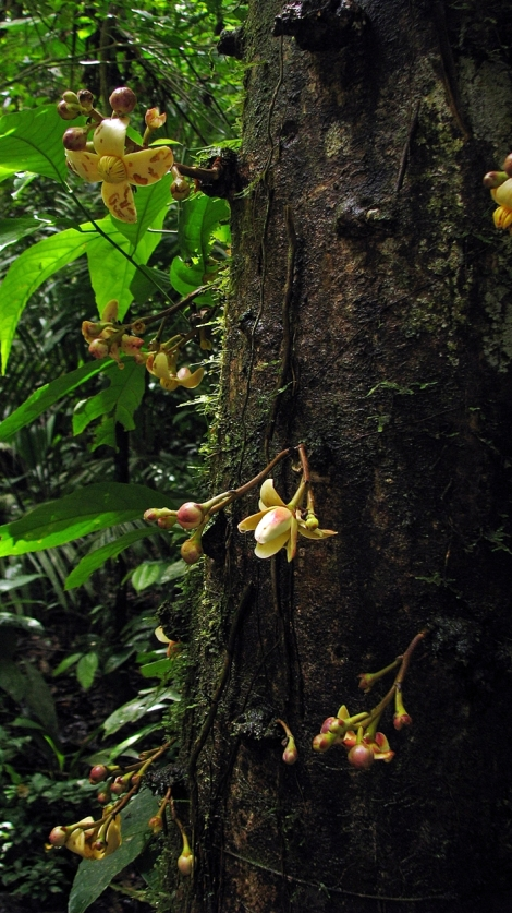 Ecuador, 2008 864