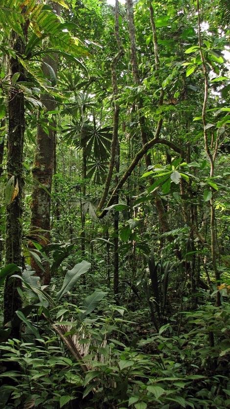 Ecuador, 2008 919