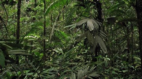 Ecuador2 354
